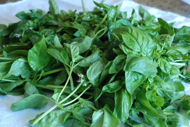 2 - Basil Pesto from the Garden