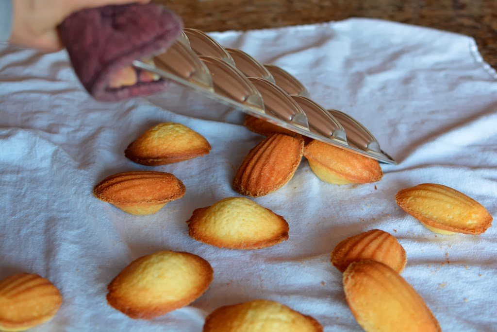 22 4 1024x683 - Meyer Lemon Madeleines