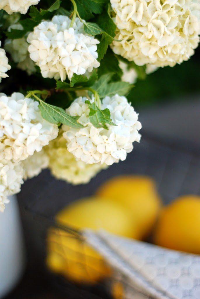 5 3 685x1024 - Lemon Olive Oil Cake with Mascarpone and Lemon Curd