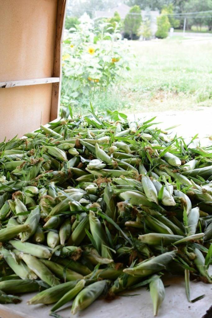 10 2 682x1024 - Farm Stand Kale and Quinoa Salad