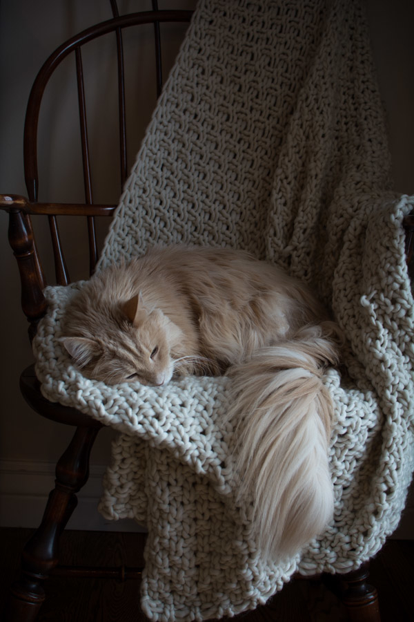 Simply So Good cat sleeping on a chair with a throw